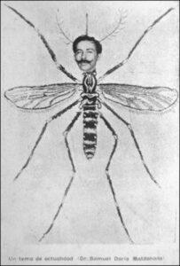 SDM mosquito